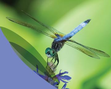 lr-dragonfly
